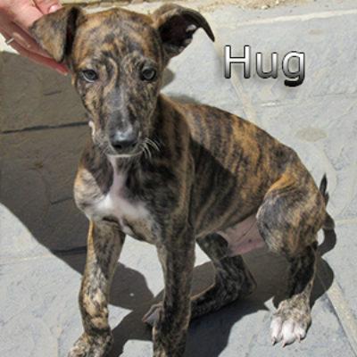 Hug-(4)web