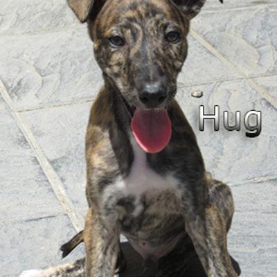 Hug-(7)web