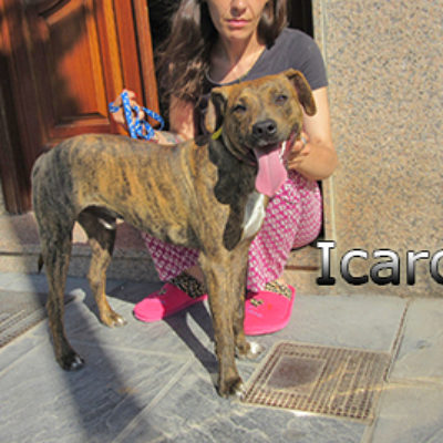 Icaro-(7)web