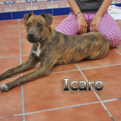 Icaro-(8)web
