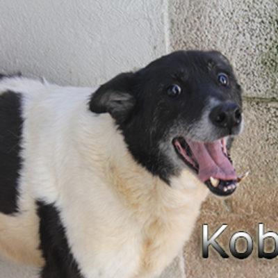 Kobit-(1)web