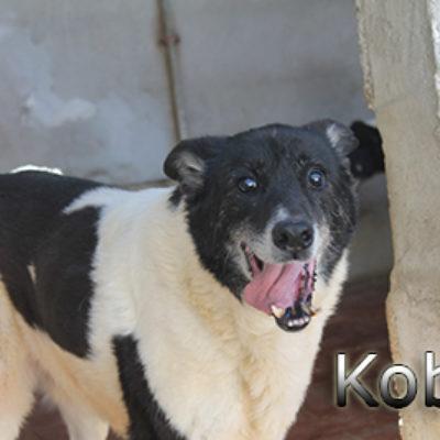 Kobit-(2)web