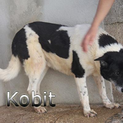 Kobit-(4)web