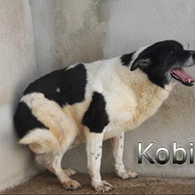 Kobit-(5)web