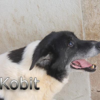 Kobit-(7)web