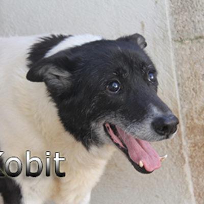 Kobit-(8)web