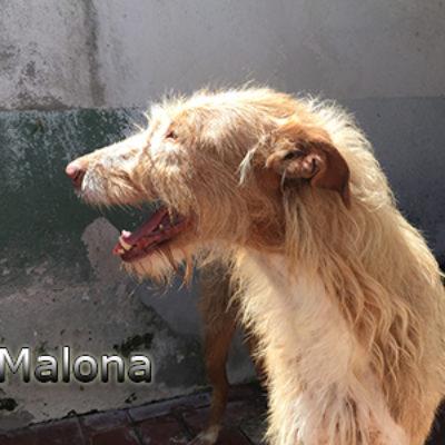 Malona-(10)web