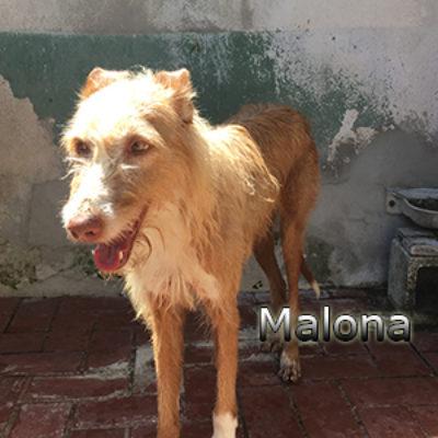 Malona-(11)web