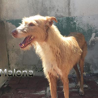 Malona-(12)web