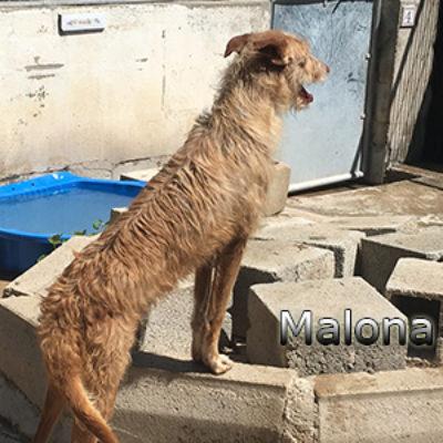 Malona-(13)web
