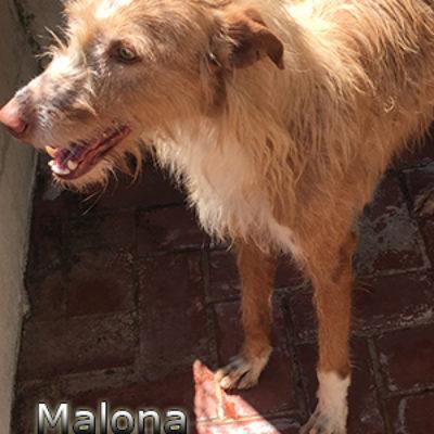 Malona-(3)web
