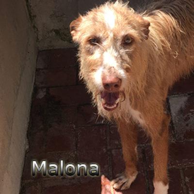 Malona-(4)web