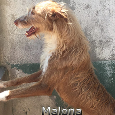 Malona-(5)web