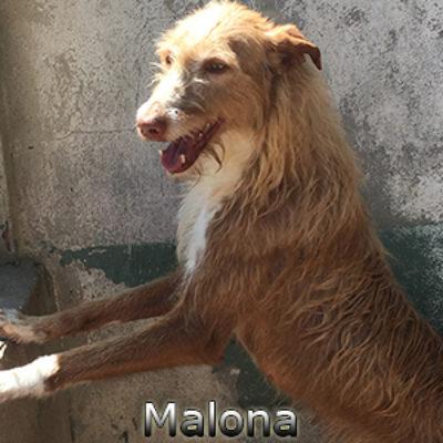 Malona-(6)web