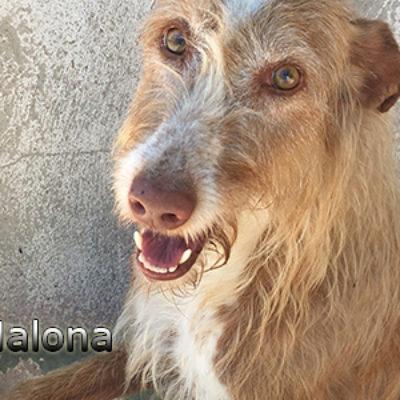 Malona-(7)web