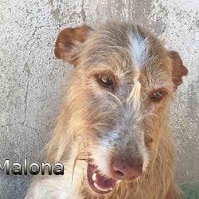 Malona-(8)web