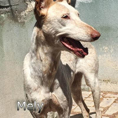 Mely-(12)web