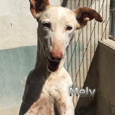 Mely-(13)web
