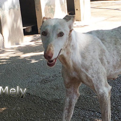 Mely-(1)web