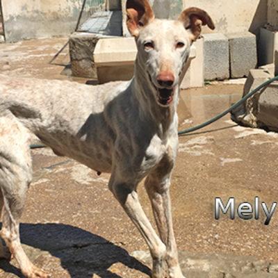 Mely-(5)web
