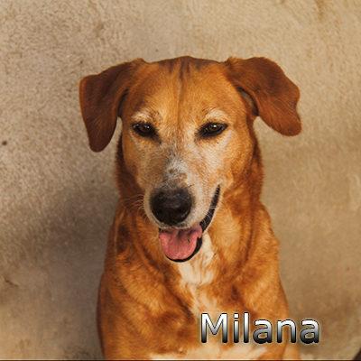 Milana-(1)web