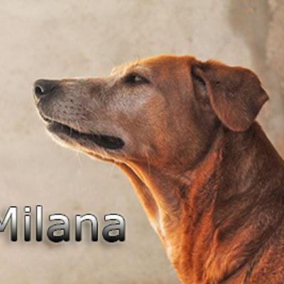 Milana-(2)web