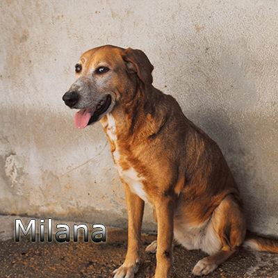 Milana-(3)web