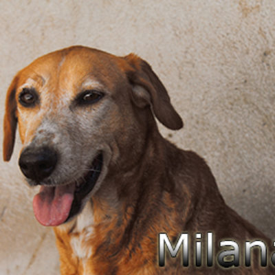 Milana-(4)web