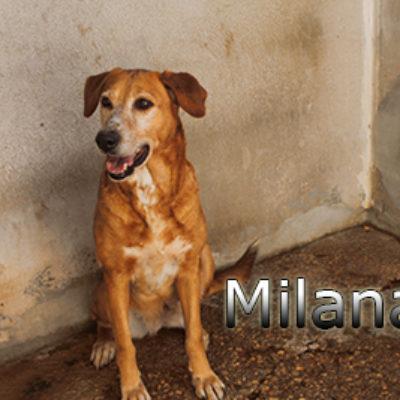 Milana-(5)web