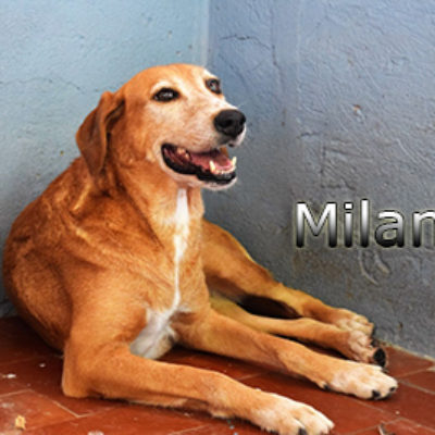 Milana_Update_09_2019-(2)web