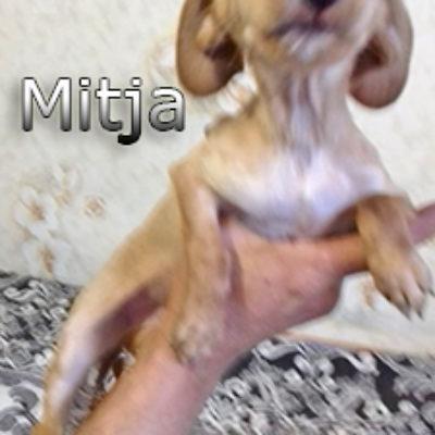 Mitja-(1)web