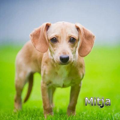 Mitja_082019-(13)web