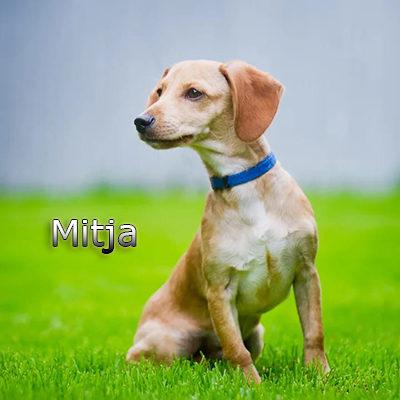 Mitja_082019-(19)web