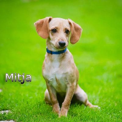 Mitja_082019-(1)web