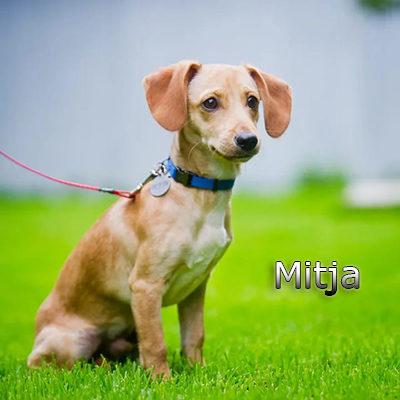 Mitja_082019-(5)web