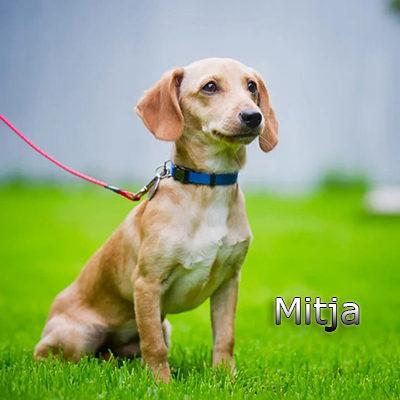 Mitja_082019-(8)web