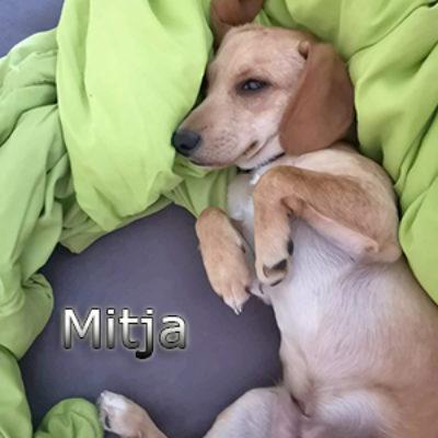 Mitja_Update_09_2019-(1)web