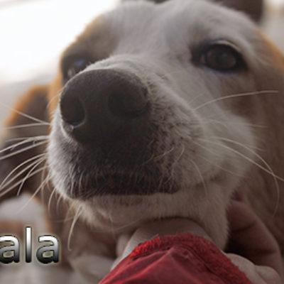 Nala-(1)web