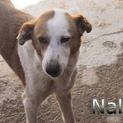Nala-(2)web