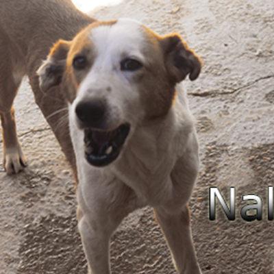 Nala-(3)web
