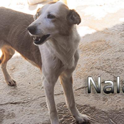 Nala-(4)web