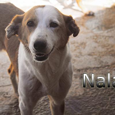 Nala-(5)web