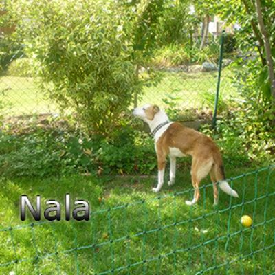 Nala_Update_18102019-(11)web