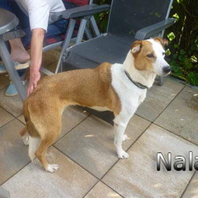 Nala_Update_18102019-(12)web