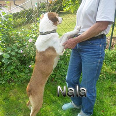 Nala_Update_18102019-(13)web
