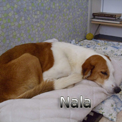 Nala_Update_18102019-(1)web