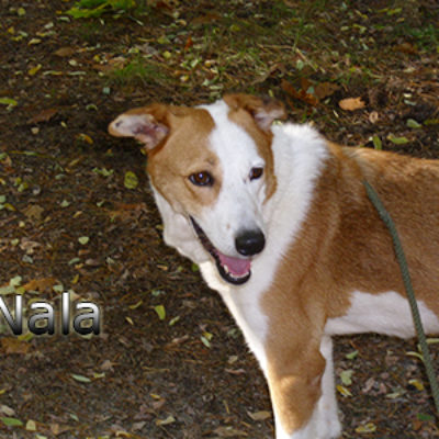 Nala_Update_18102019-(3)web