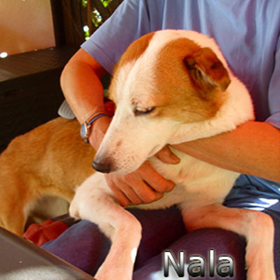 Nala_Update_18102019-(4)web