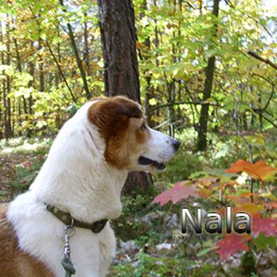 Nala_Update_18102019-(5)web