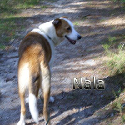 Nala_Update_18102019-(7)web